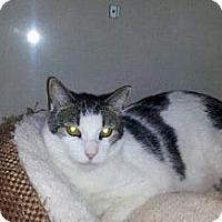 Adopt A Pet :: Toby Keith - Mesa, AZ