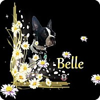 Adopt A Pet :: Belle - Berthierville / Sorel, QC