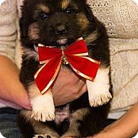 Adopt A Pet :: Dougetta - Saskatoon, SK