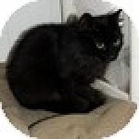 Adopt A Pet :: Matzy - Vancouver, BC