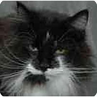 Adopt A Pet :: BonBon - Columbus, OH