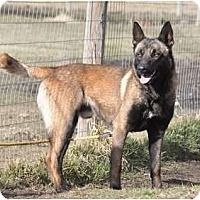 Adopt A Pet :: Kilo - Hamilton, MT