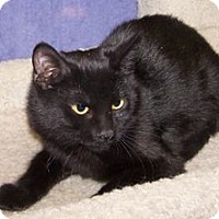Adopt A Pet :: K-Nicholas2-Licorice - Colorado Springs, CO