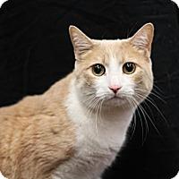 Adopt A Pet :: Savannah - Sacramento, CA