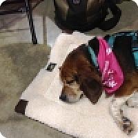 Adopt A Pet :: Addilyn - Novi, MI