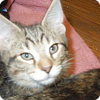 Adopt A Pet :: Hobart - Medina, OH