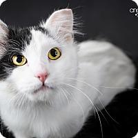 Adopt A Pet :: Fiddler - Eagan, MN