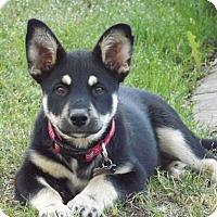 Adopt A Pet :: Doris - Phoenix, AZ