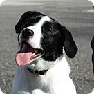 Adopt A Pet :: FENWAY
