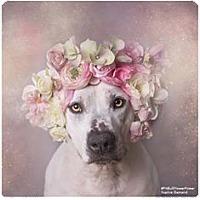 Adopt A Pet :: Jessica - Whitestone, NY