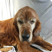 Adopt A Pet :: Xilo - BIRMINGHAM, AL