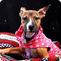 Adopt A Pet :: Winifred aka Winnie - Detroit, MI