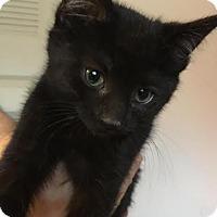 Adopt A Pet :: Bunny - Columbus, OH