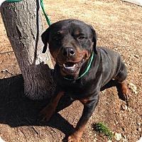 Adopt A Pet :: Cody - Rockmart, GA