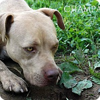 Adopt A Pet :: Champagne - Franklin, TN