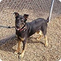 Adopt A Pet :: Bailey - Clear Lake, IA
