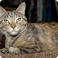 Adopt A Pet :: Anny - Lincoln, NE