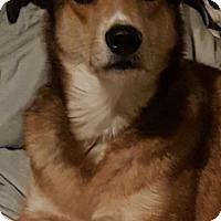 Adopt A Pet :: Bella - Sagaponack, NY