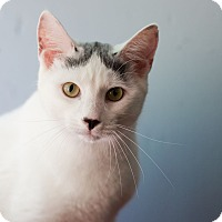 Adopt A Pet :: Lou C - Avon, NY