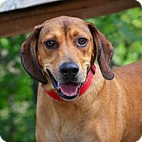 Adopt A Pet :: Chuck - Edwardsville, IL