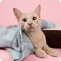 Adopt A Pet :: Tommy - Wilmington, DE