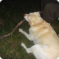 Adopt A Pet :: Baxter - Northumberland, ON