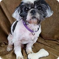 Adopt A Pet :: Bingo Ranger - Urbana, OH