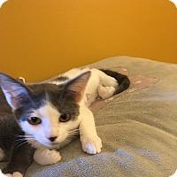 Adopt A Pet :: Gina - Tampa, FL
