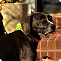 Adopt A Pet :: Lexie - Woodstock, GA