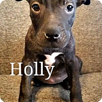 Adopt A Pet :: Holly - Des Moines, IA