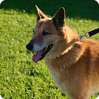 Adopt A Pet :: CUPID - Phoenix, AZ