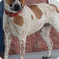 Adopt A Pet :: Zeus - Palmdale, CA