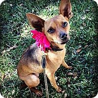 Adopt A Pet :: Hazel - Torrance, CA
