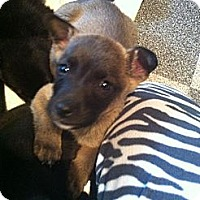 Adopt A Pet :: Kory - Saskatoon, SK