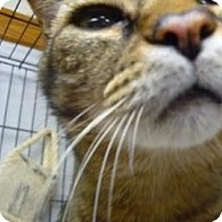 Adopt A Pet :: Tigger - Milwaukee, WI