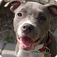 Adopt A Pet :: Violet - Los Angeles, CA