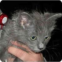 Adopt A Pet :: Scout - Davis, CA
