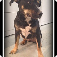 Adopt A Pet :: Thor - Indian Trail, NC