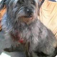 Adopt A Pet :: Raven - Irmo, SC