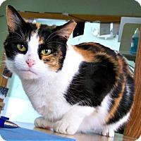 Adopt A Pet :: Sierra - Toledo, OH