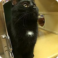 Adopt A Pet :: Nitro - Monroe, GA
