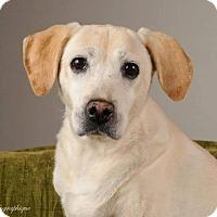 Adopt A Pet :: Artie - Henderson, NV