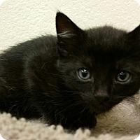 Adopt A Pet :: Tanglefoot - Phoenix, AZ