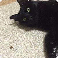 Adopt A Pet :: Alvira - Matthews, NC