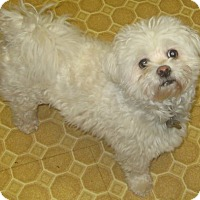Adopt A Pet :: Prince-adoption pending - Mississauga, ON