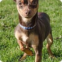 Adopt A Pet :: ROCCO - Sandusky, OH