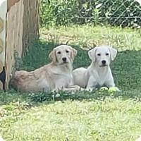 Adopt A Pet :: Britt and Brandy - Scottsboro, AL
