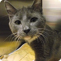 Adopt A Pet :: Marvin - Chambersburg, PA