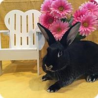 Adopt A Pet :: Honeysuckle - Columbus, OH