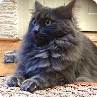 Adopt A Pet :: Alice (& Gertrude) - Herndon, VA